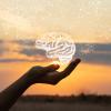 De que forma as emocoes afetam o cerebro